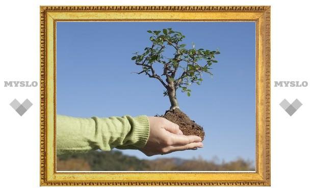 Туляков призывают восстанавливать леса Тульской области