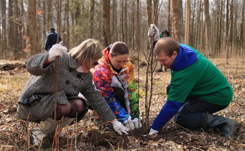 В Ясной Поляне обновили лес