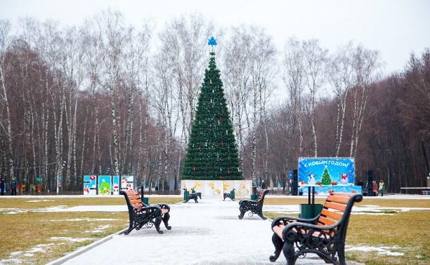 На новогодние праздники в Туле откроются 23 ёлки