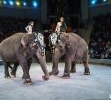 Туляков приглашают на цирковой новогодний флешмоб «Большой хоровод со слоном»