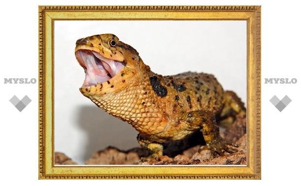 Туляков познакомят с крокодиловым шинизавром