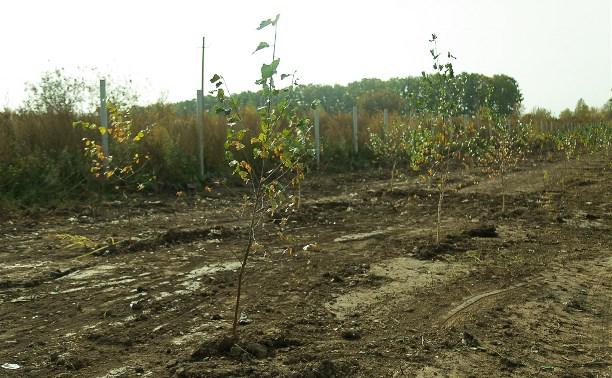 На территории бывшей свалки возле деревни Судаково высаживают деревья