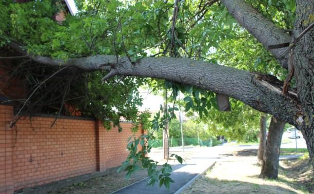 В Советске дерево упало на крышу жилого дома
