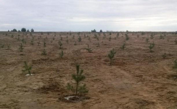 На месте свалки в Суворовском районе посадили сосны