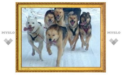 Ездовые собаки из Крапивны будут покорять Германию