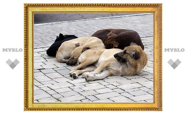 Пойманных в Болохове собак будут усыплять