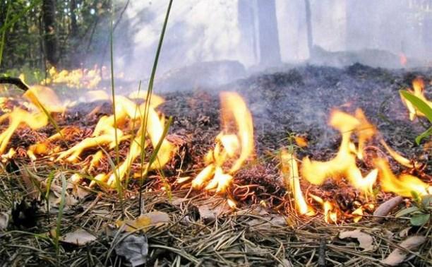 В Туле 13 апреля будет организован контролируемый пал травы