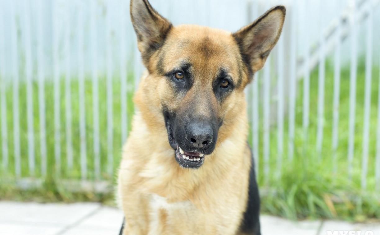 В Суворове ищут нового хозяина для полицейской собаки, списанной на пенсию