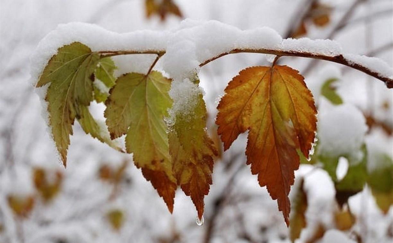 Погода в Туле 25 ноября: морозно, сухо, умеренный ветер