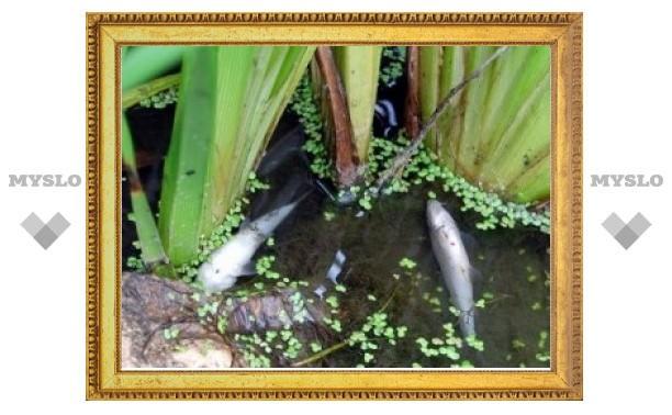 В Советске на водохранилище погибла рыба