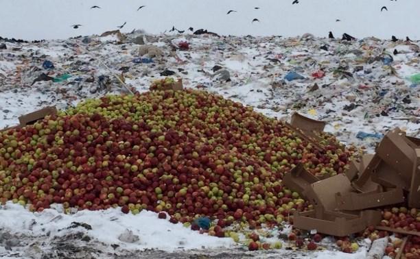 В Туле уничтожили 21 тонну польских яблок