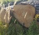 Зачем в Щекинском районе вырубают столетние сосны