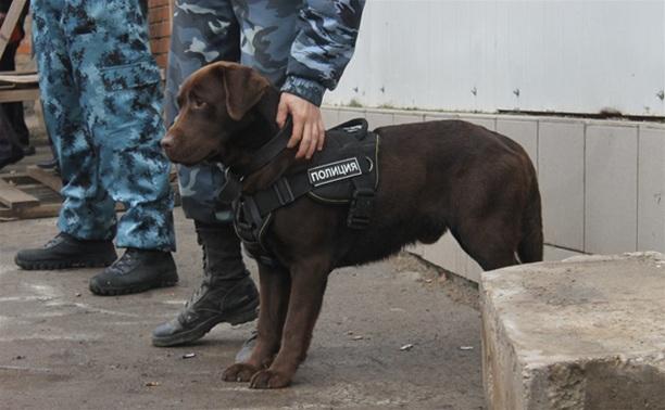 Полицейская собака помогла поймать похитителя вина