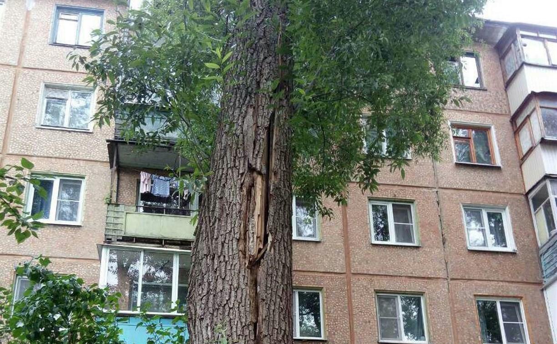 Туляк два года просит спилить аварийное дерево у жилого дома