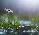 Погода в Туле 30 августа: жарко, кратковременный дождь с грозой