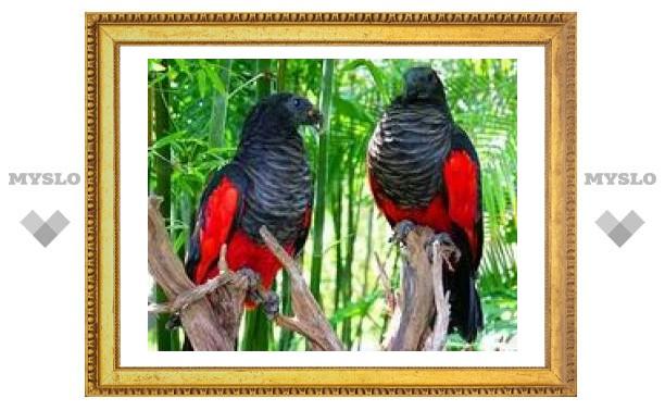 Тулякам покажут экзотических попугаев