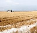 В Тульской области погибший урожай был частично застрахован