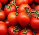 В Туле в партии томатов был обнаружен карантинный вредитель