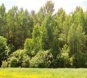 Прогулка в лесу для туляков станет платной?