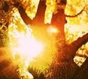 В Туле установлен весенний температурный рекорд