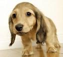 В России могут законодательно запретить изымать у должников домашних животных