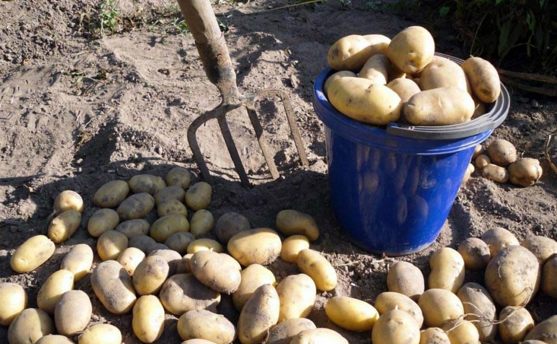 В Тульской области семейная пара пыталась украсть 100 кг картошки