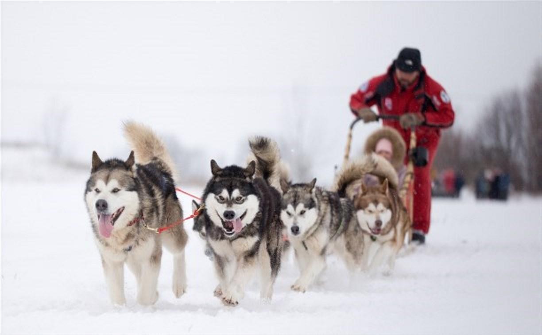 Куликово поле приглашает на соревнования на собачьих упряжках