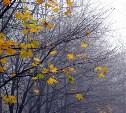 Погода в Туле 15 сентября: тепло, сильный ветер и небольшой дождь