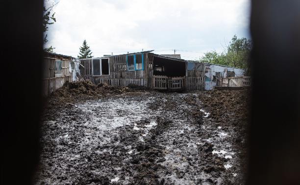 Скотина и горы навоза посреди деревни: в Тульской области жители требуют закрыть токсичную ферму