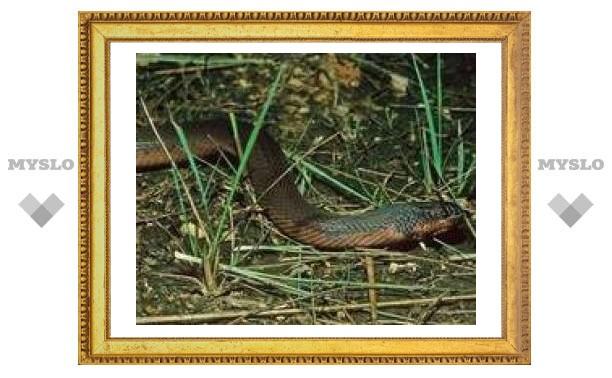 25 сентября: змеи перебираются в лес
