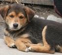 Приюта для собак в Туле не будет