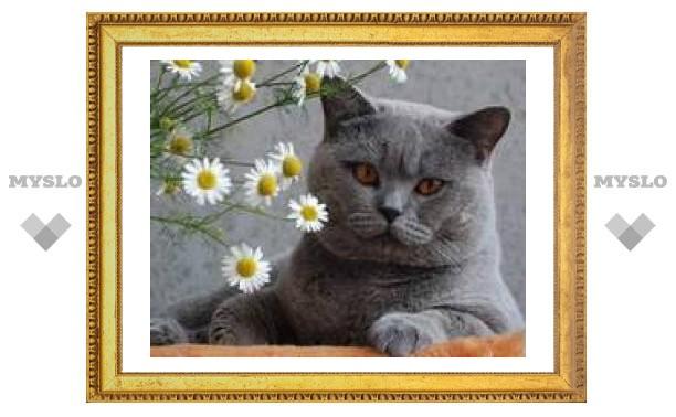 В Туле кот трижды выпал из окна