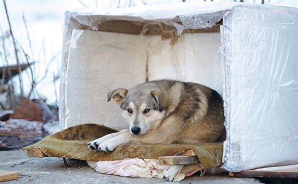 В Туле построят приют для бездомных животных