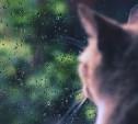 Погода в Туле 11 октября: облачно, прохладно, небольшой дождь
