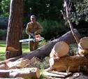 Туляки смогут пожаловаться на аварийно-опасные деревья в своем дворе