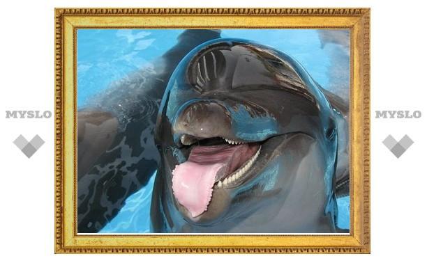 Московский дельфинарий откроет тульские гастроли