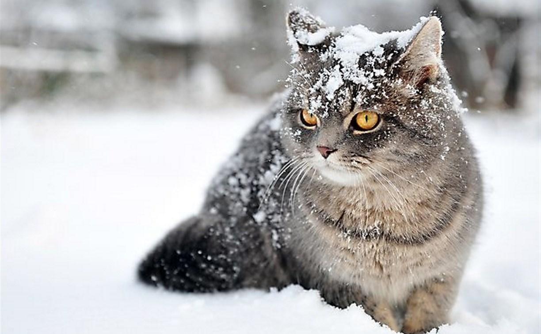 Погода в Туле 20 января: облачно, небольшой снегопад
