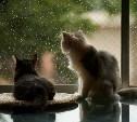 Погода в Туле 10 июля: тепло, возможен дождь
