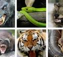 «Банановая змея», чупакабра и серый волк терроризируют тульских журналистов