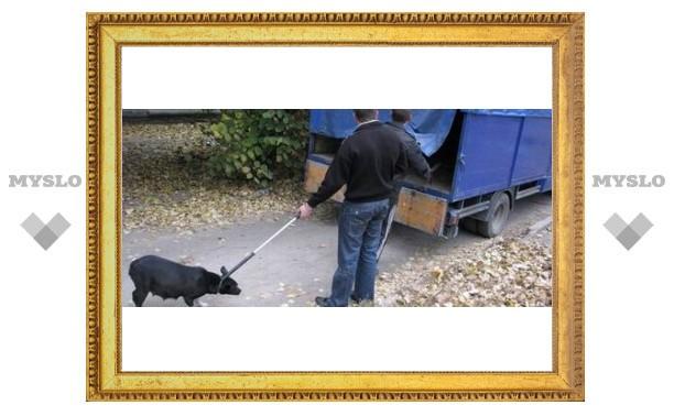 В Туле тратят миллионы на бродячих псов