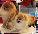В Туле прошла Всероссийская выставка собак
