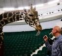 Цирк больших зверей в Туле: милый жираф Багир готов целовать и удивлять зрителей