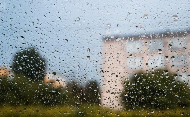 Погода в Туле 8 августа: сыро, ветрено, до 25 градусов тепла