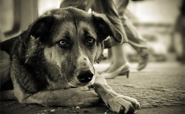 Будут ли в Туле убивать бездомных собак?