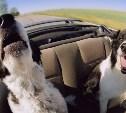 Через Тулу пройдёт Всероссийский автопробег в защиту животных