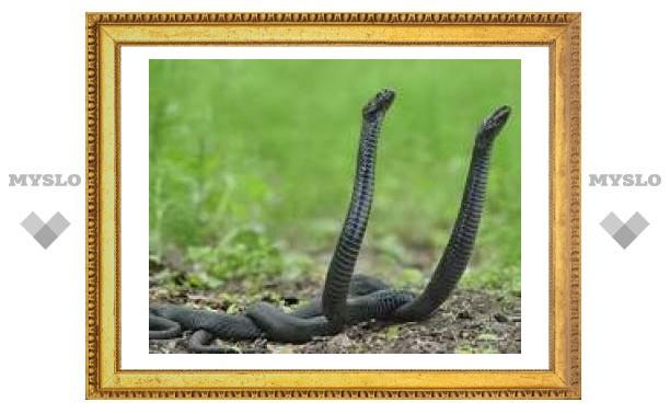 12 июня: Пришла пора змеиных свадеб