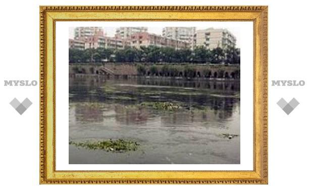 Водоемы центрального Китая заполнены ядовитыми водорослями