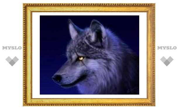 2 ноября: волчица - заступница рожденного в этот день