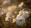 Погода в Туле 21 августа: дожди, грозы, до 26 градусов тепла