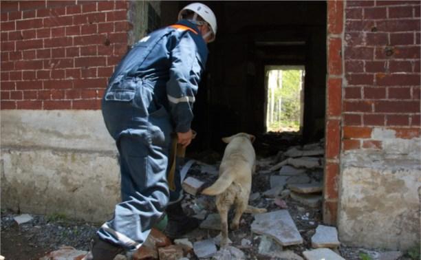 Тульские собаки-спасатели участвуют в соревнованиях в Брянской области